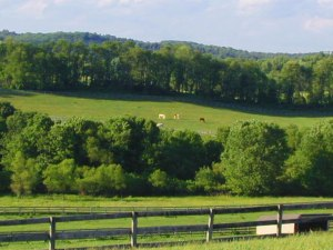 b9-pasture-horses