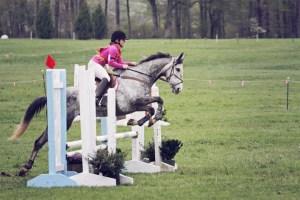 Robin jumping