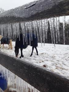 Pony icicles